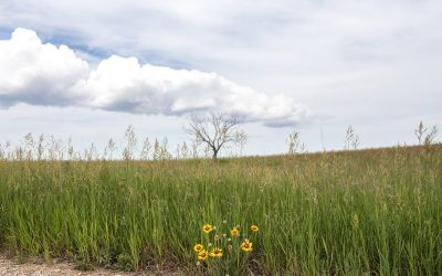 beaver creek conservation area – what's blooming in june